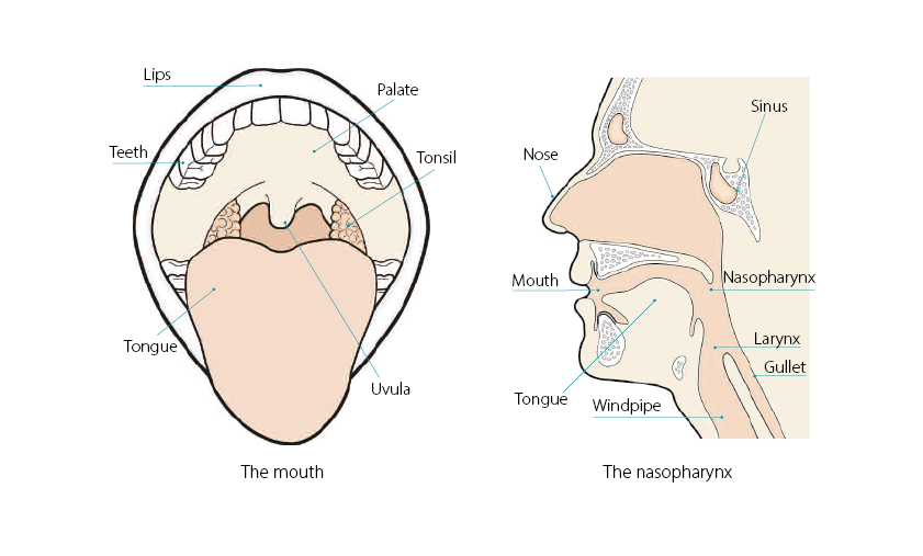 mouth and head