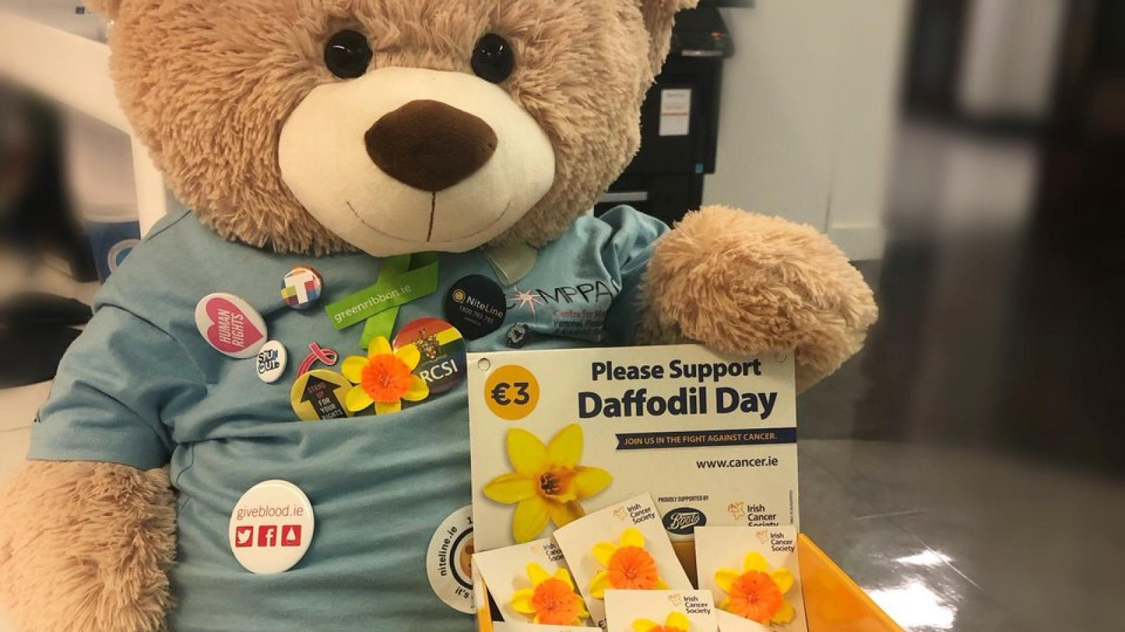 Daffodil Day teddy bear and collection box